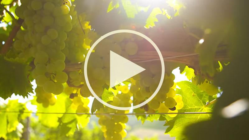 Chef Alessandro Borghese nelle terre dell'ASTI Docg - Il profumo dell'uva Moscato