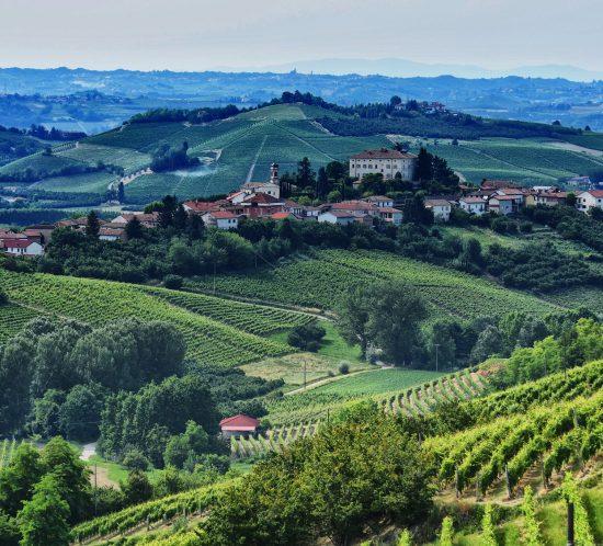 Vigne di Moscato d'Asti Secco