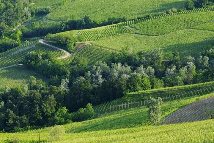 Vineyards in Piedmont © LianeM